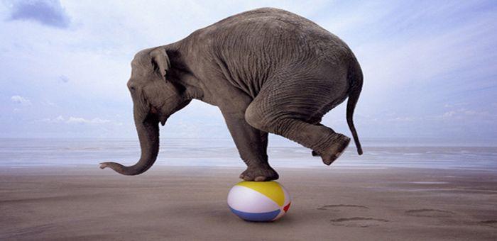 Παραβολές - Ο Ελέφαντας και τα Δεσμά του